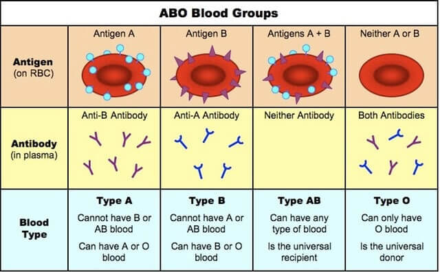 Blood Group, Antigens and Antibodies
