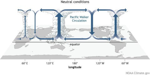 El nino neutral conditions
