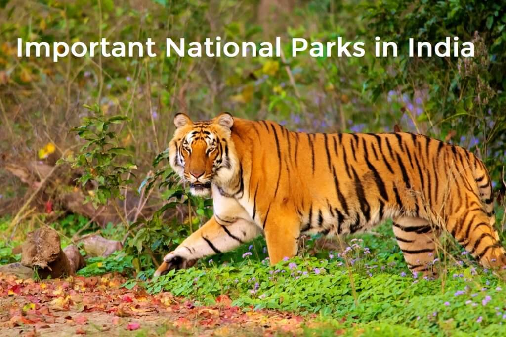 Important National Parks in India UPSC
