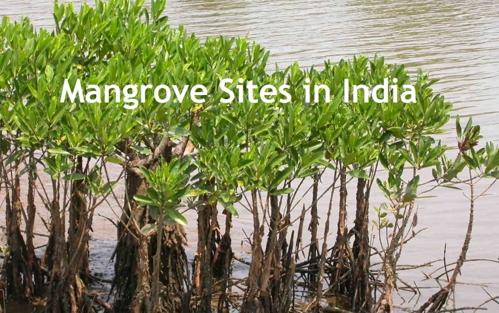 Mangrove Sites in India