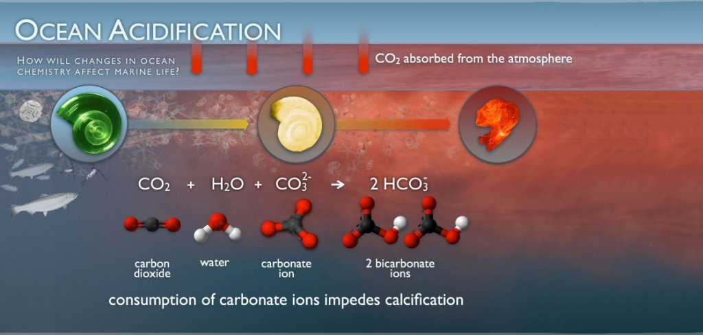 Ocean Acidification and Corals