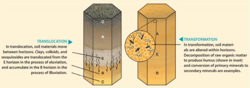 Soil-forming Processes Translocation