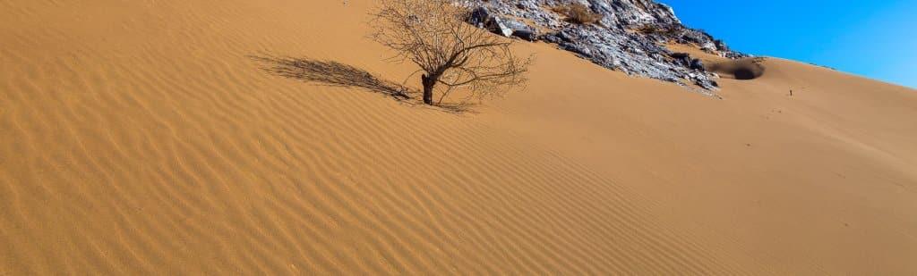 Types of Soil in India – Desert Soil