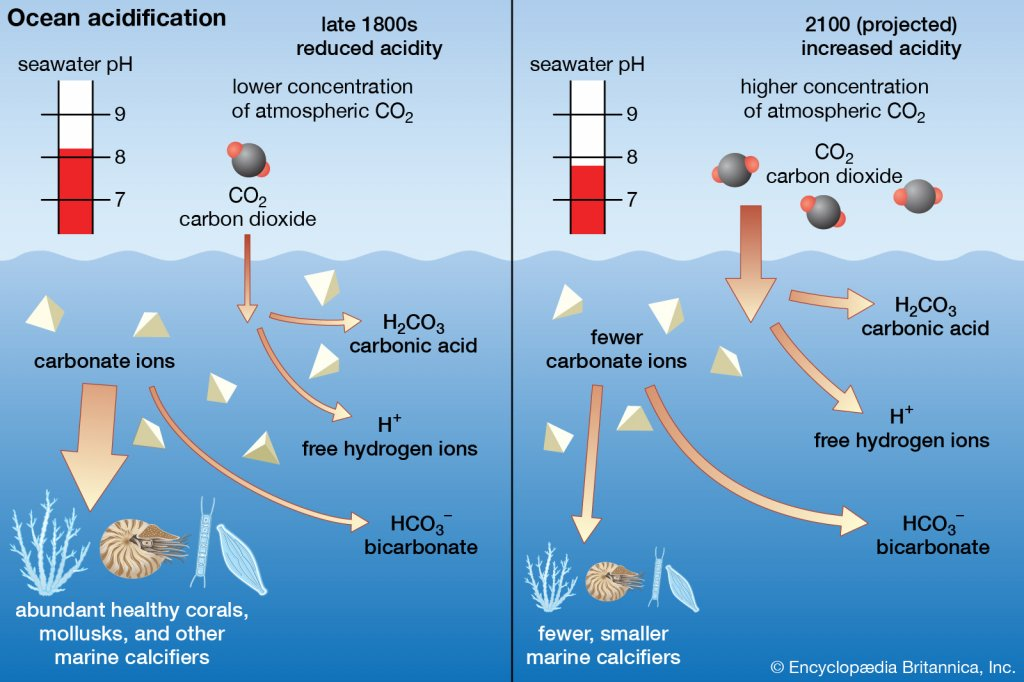 ocean acidification upsc