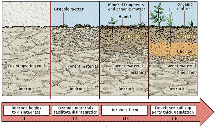 soil genesis upsc