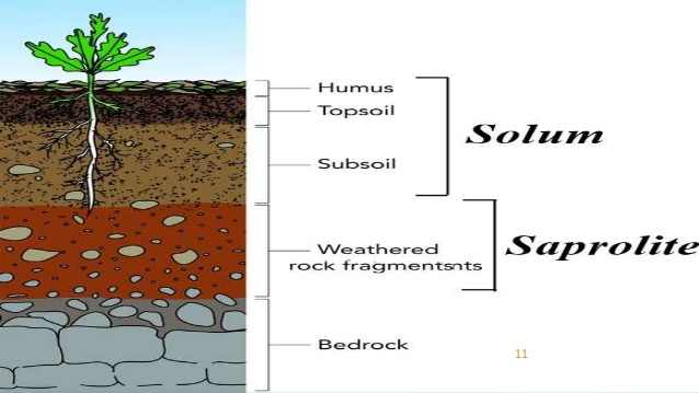 soil profile solum and regolith