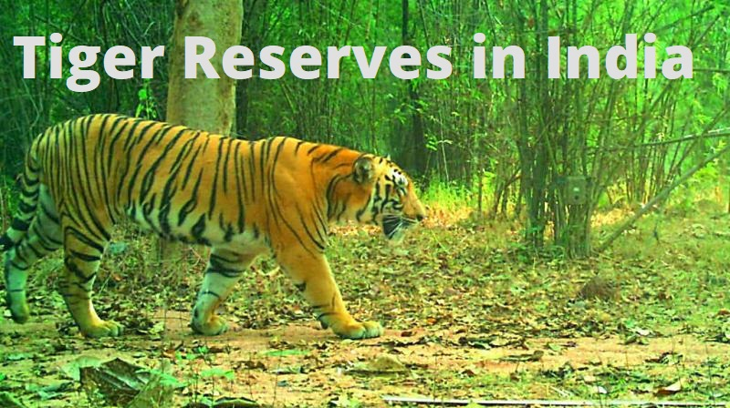Tiger Reserves in India UPSC