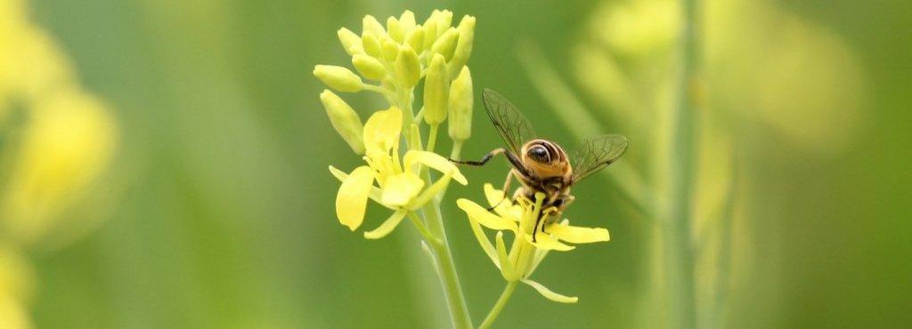 apiculture in india upsc