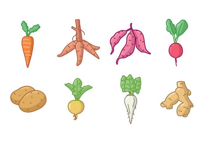 tuber crops