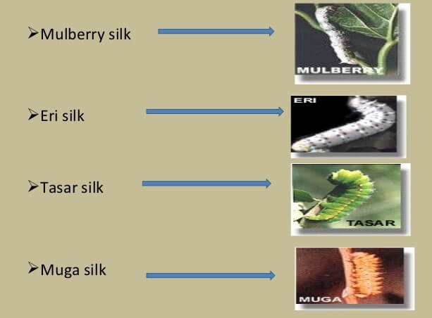 types of silk worm in india upsc