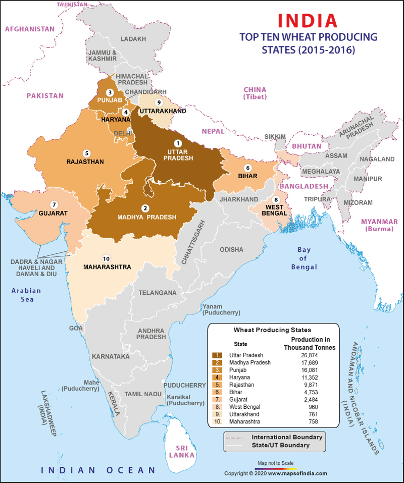 wheat production map of india